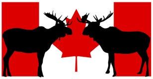 Alces canadenses ilustração do vetor