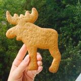 Alces de la galleta del jengibre Imagen de archivo libre de regalías