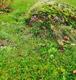 Alces en la roca fotografía de archivo libre de regalías