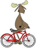 Alces pedaling su bici al revés Fotos de archivo