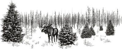 Alces Siberian na floresta do inverno ilustração royalty free