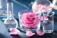 Alchemy and aromatherapy with rose flowers and chemical flasks.  Stock Photography