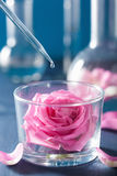 Alchemy and aromatherapy with rose flowers and chemical flasks.  Royalty Free Stock Photo