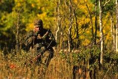 Alci di Bowhunter Bugling Fotografia Stock Libera da Diritti