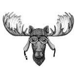 Alci, illustrazione d'uso del casco del club della mosca dell'aviatore del motociclo del motociclista dell'animale selvatico degl illustrazione vettoriale