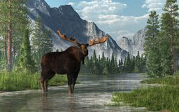Alci in un fiume royalty illustrazione gratis