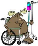 Alci in una sedia a rotelle Fotografia Stock