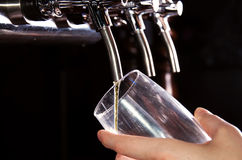 Alcohol conceptual image. Bartender giving the beer from dispenser Royalty Free Stock Image