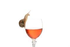 Alcohol de consumición del caracol foto de archivo libre de regalías