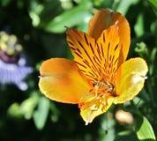 Alcohol 12 de la abeja y de la flor Fotografía de archivo libre de regalías