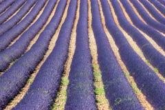 Alcohol de Provence Foto de archivo libre de regalías