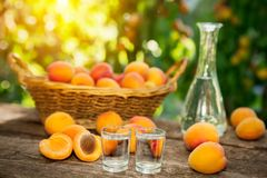 Alcohol fruit brandy drink in shot glass Royalty Free Stock Photography