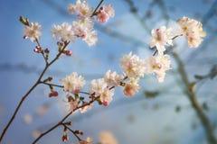 Alcohol hermoso de la primavera Fotos de archivo