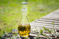 Alcohol home made tincture Royalty Free Stock Images