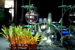 Alcohol laboratory. During a party, with beakers in the background and fresh carrots in the foreground- could also be used in biochemisty/chemistry concepts Royalty Free Stock Photo