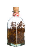 Alcohol of rosemary. Glass bottle of homemade medicine isolated in whait Royalty Free Stock Images