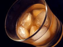 Alcoholic drink. Glass of alcoholic drink with ice Royalty Free Stock Photography