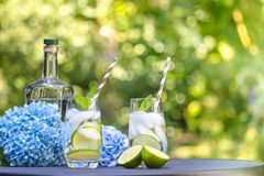 Gin tonic cocktails with lime and mint in the garden stock images