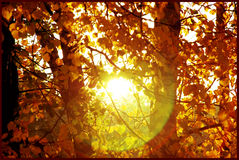Alcoolici di autunno Fotografia Stock Libera da Diritti