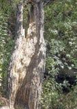 Alcornocal在森林里 图库摄影