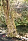 Alcornocal在森林里 免版税图库摄影