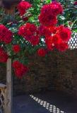 A alcova no jardim do verão com as flores bonitas da escalada aumentou Fotos de Stock Royalty Free