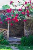 A alcova no jardim do verão com as flores bonitas da escalada aumentou Imagem de Stock