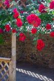 A alcova no jardim do verão com as flores bonitas da escalada aumentou Foto de Stock