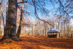 Alcove in the red wood Royalty Free Stock Photo