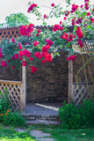 Alcove in the summer garden with beautiful flowers of climbing rose. Stock Image