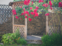 Alcove in the summer garden with beautiful flowers of climbing rose. Bright sunny day. Wooden arbor in garden, surrounded by green lawn Royalty Free Stock Photography