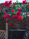 Alcove in the summer garden with beautiful flowers of climbing rose. Bright sunny day. Wooden arbor in garden, surrounded by green lawn Stock Photo