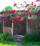 Alcove in the summer garden with beautiful flowers of climbing rose. Bright sunny day. Wooden arbor in garden, surrounded by green lawn Royalty Free Stock Photos