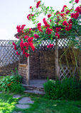 Alcove in the summer garden with beautiful flowers of climbing rose. Bright sunny day. Wooden arbor in garden, surrounded by green lawn Royalty Free Stock Photo
