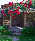 Alcove in the summer garden with beautiful flowers of climbing rose. Bright sunny day. Wooden arbor in garden, surrounded by green lawn Stock Image