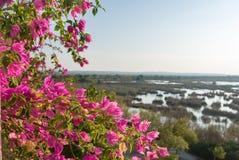 Alcudia大盐水盐水湖在马略卡 库存图片