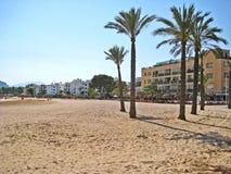 Alcudia beach with palms, Majorca Stock Image