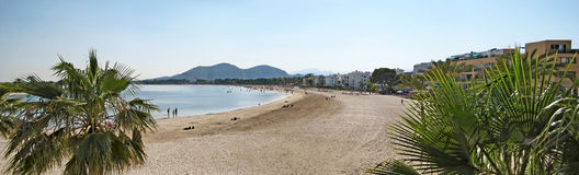 Alcudia beach panorama with palms, Majorca Stock Image