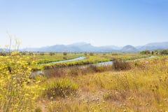 Alcudia, Mallorca - Bloeiend landschap van Mallorca voor s royalty-vrije stock fotografie