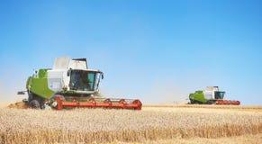 Alcune associazioni che tagliano una banda attraverso il mezzo di un giacimento di grano durante il raccolto Immagini Stock