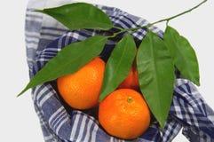Alcune clementine avvolte con un fazzoletto valenzano tipico accompagnato da un ramo arancio con le foglie verdi fotografia stock libera da diritti