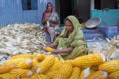 Alcune donne locali che raccolgono cereale, Manikgonj, Bangladesh Fotografie Stock Libere da Diritti