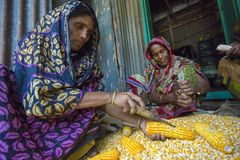 Alcune donne locali che raccolgono cereale, Manikgonj, Bangladesh Fotografie Stock