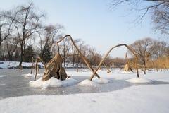Alcune foglie del loto con neve nell'inverno Fotografia Stock Libera da Diritti