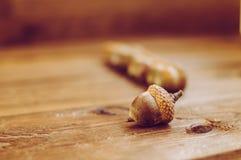 Alcune ghiande sulla tavola di legno Fotografie Stock