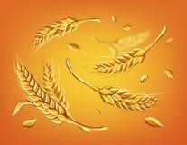 Alcune orecchie di grano su uno schizzo beige di vettore del disegno della mano del fondo illustrazione di stock