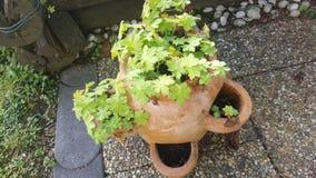 Alcune piante Immagini Stock