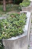 Alcune piante verdi ad un marciapiede immagine stock