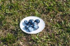 Alcune uova di Pasqua colorate sul piatto, sul prato inglese verde Fotografia Stock Libera da Diritti
