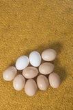 Alcune uova su un fondo luminoso Immagine Stock Libera da Diritti